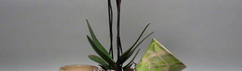 Cache-pots pour les orchidées