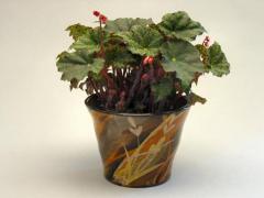 Cache-pot - Herbes ocre et noir